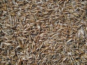 Gras mengsel Traaggroei en schaduwrijk p/kg