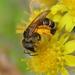 Bijenmengsel Tubinger Classic p/kg