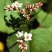 Flora Fauna mengsel p/kg