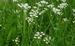 Paardenkruidenmix Herbic per kg.